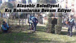 Alaşehir'de Ağaçların Budama ve Bakım Çalışmaları Devam Ediyor