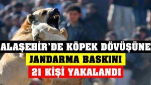 Alaşehir'de Köpek Dövüştürenlere Jandarma Baskını
